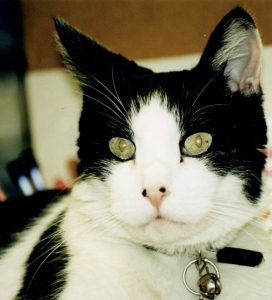Black and White Cat-Animal Souls