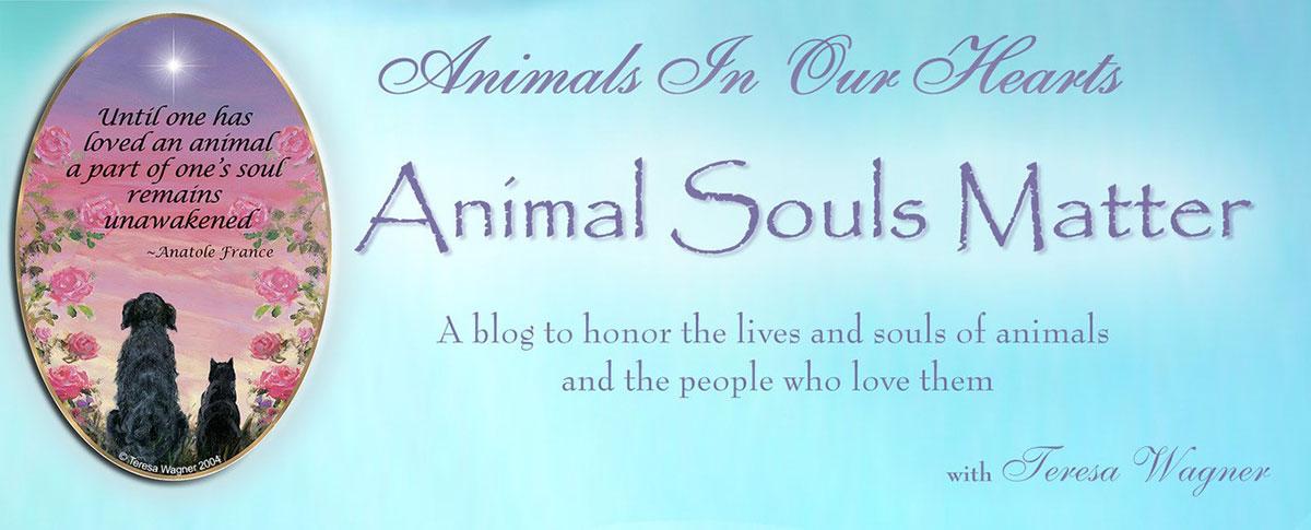 Animal Souls Matter