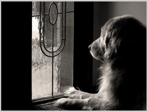 Reducing Stress for Your Animals While You Are Traveling